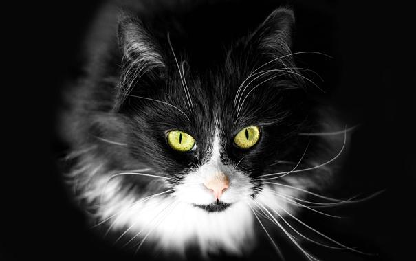 Фото обои кошка, кот, усы, фон, кошак