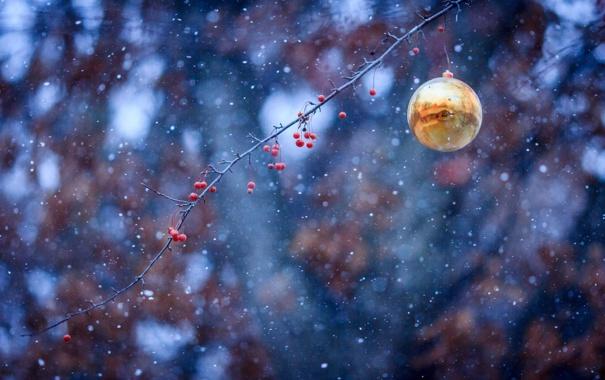 Фото обои снег, ягоды, игрушка, шар, ветка, новогодняя