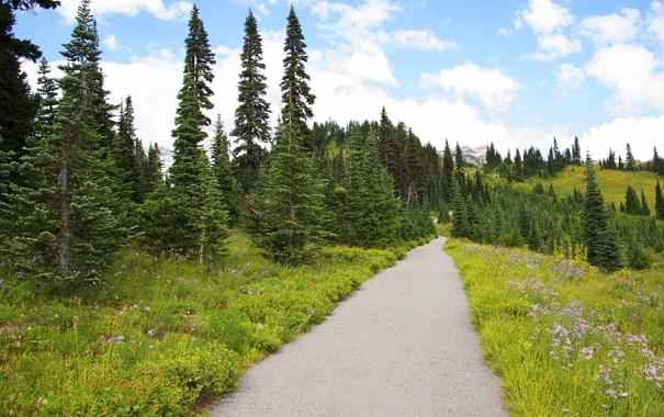 Фото обои дорога, поле, лес, небо, трава, деревья, пейзаж
