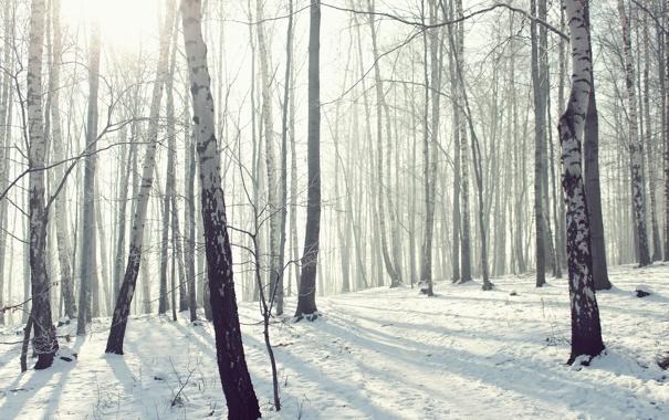 Фото обои лес, роща, мороз, природа, снег, зима