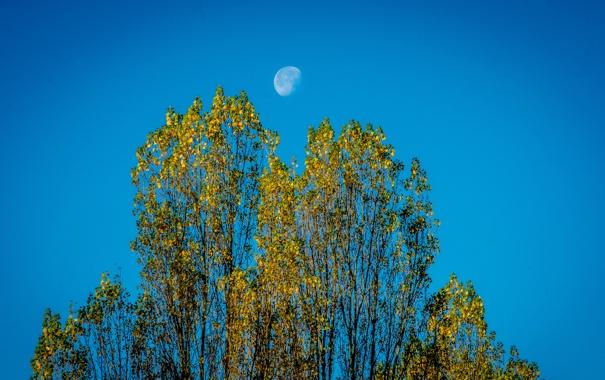Фото обои листья, осень, небо, деревья, луна