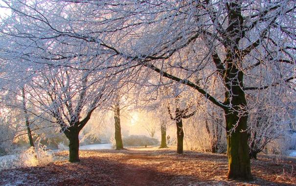 Фото обои парк, иний, листва, Light my way
