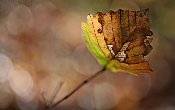 Фото обои осень, листья, макро, фото, листок, осенние обои