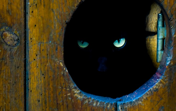 Фото обои глаза, кот, взгляд, котэ, лазейка