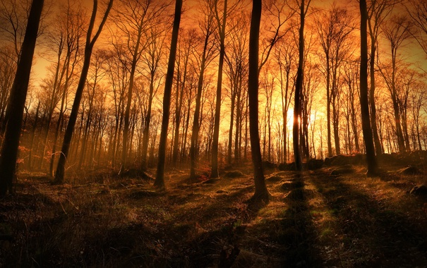 Фото обои лес, лучи, свет, деревья, природа, фото, вечер