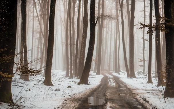 Фото обои зима, дорога, лес