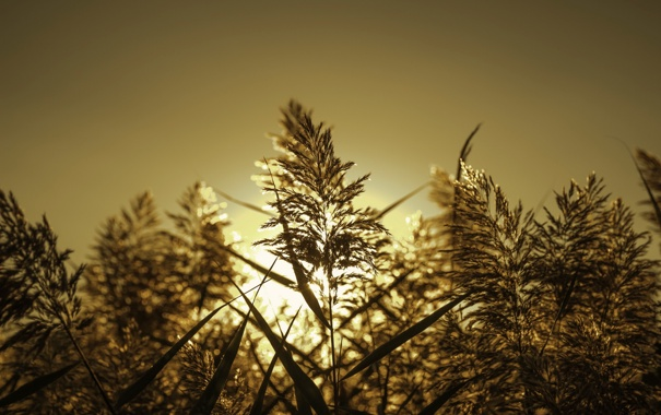 Фото обои осень, свет, фон