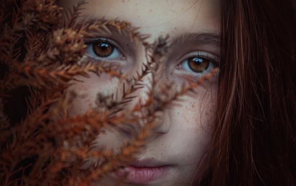 Фото обои осень, веснушки, кареглазая, Brookie