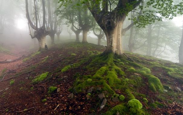 Фото обои лес, природа, туман, зонт
