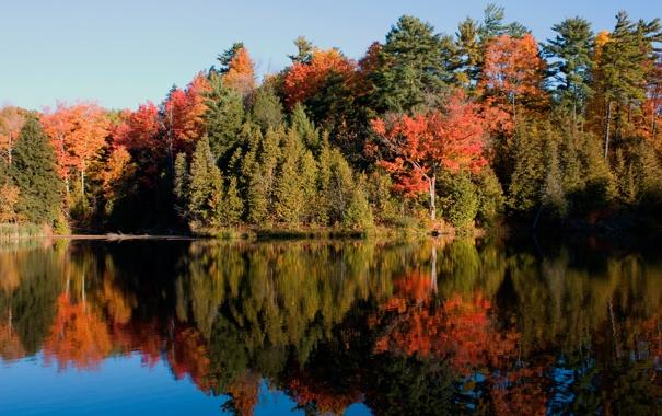 Фото обои лес, вода, зеркало, scanlon creek