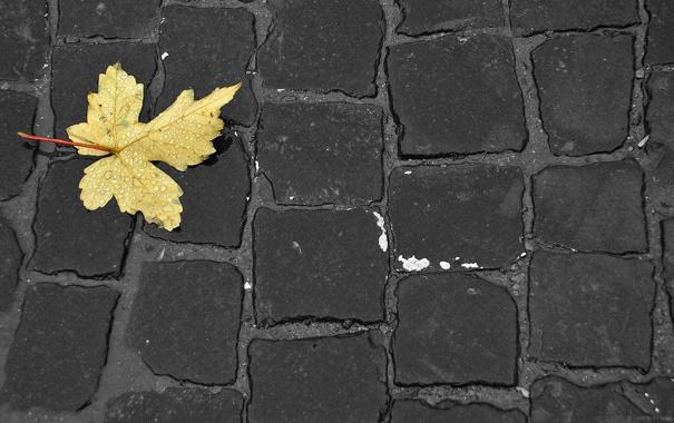 Фото обои осень, листья, макро, креатив, обои, минимализм, бурковка