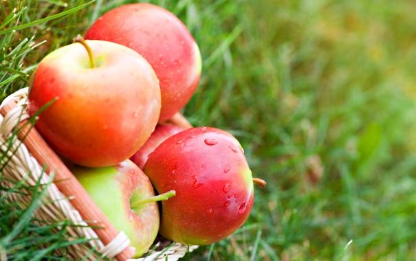 Фото обои трава, капли, природа, корзина, яблоки, красные, фрукты