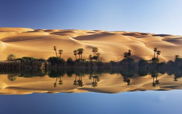 Фото обои песок, озеро, пальмы, пустыня, дюны, оазис, Ливия