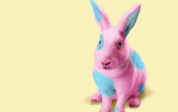 Фото обои розовый, кролик, голубой, фон, пятна, цвет