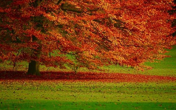 Фото обои осень, листья, пейзаж, природа, дерево