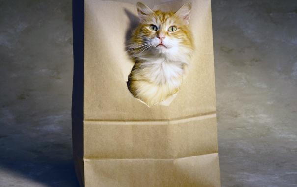 Фото обои язык, кот, голова, рыжий, дырка, бумажный пакет