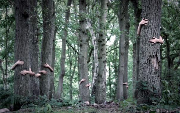 Фото обои лес, деревья, руки