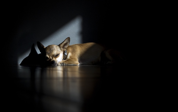 Фото обои дом, тень, собака
