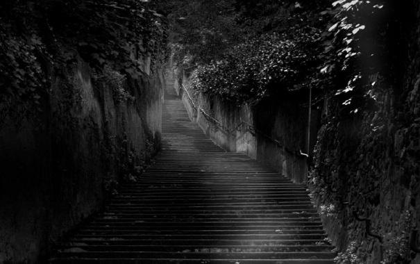 Фото обои деревья, лестница, ступеньки