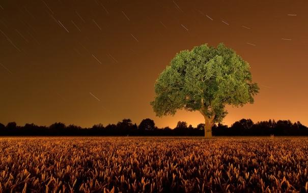 Фото обои поле, пейзаж, ночь, дерево