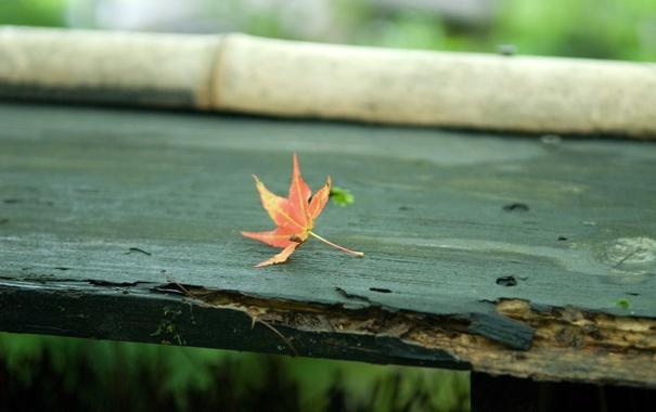 Фото обои осень, скамейка, лист