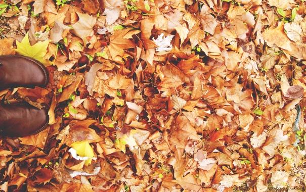 Фото обои осень, листья, сапоги, ботинки