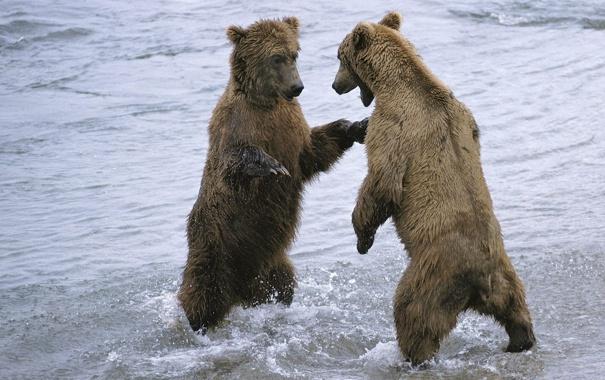 Фото обои вода, снег, медведи, парочка