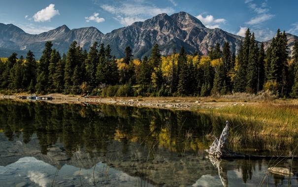 Фото обои деревья, горы, озеро, отражение, Канада, Альберта, Alberta