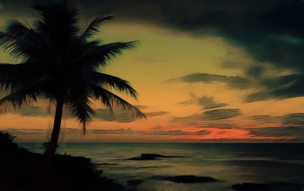 Фото обои небо, пальма, океан, берег