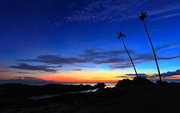 Фото обои море, небо, облака, ночь, камни, пальмы, скалы