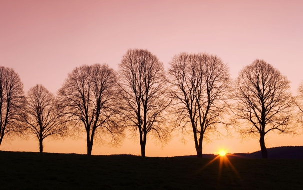 Фото обои деревья, пейзаж, закат, природа, тень, вечер