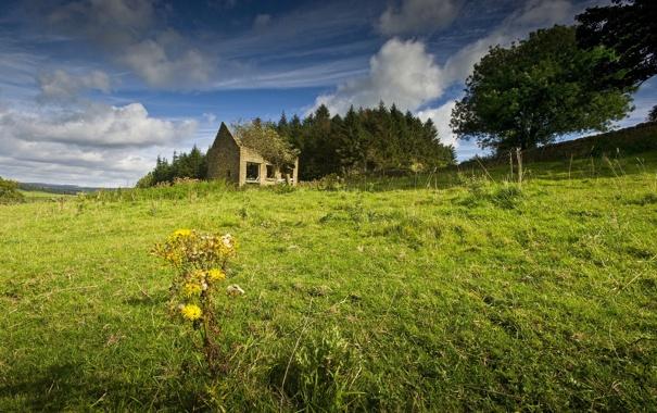 Фото обои поле, лето, пейзаж, дом