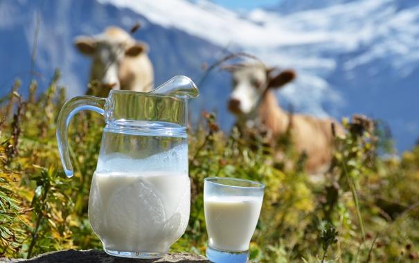 Фото обои горы, стакан, коровы, молоко, кувшин