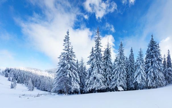 Фото обои зима, лес, облака, снег, ёлки
