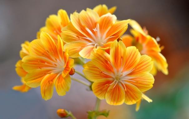 Фото обои макро, растение, лепестки, соцветие