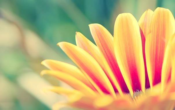 Фото обои цветок, растение, лепесток