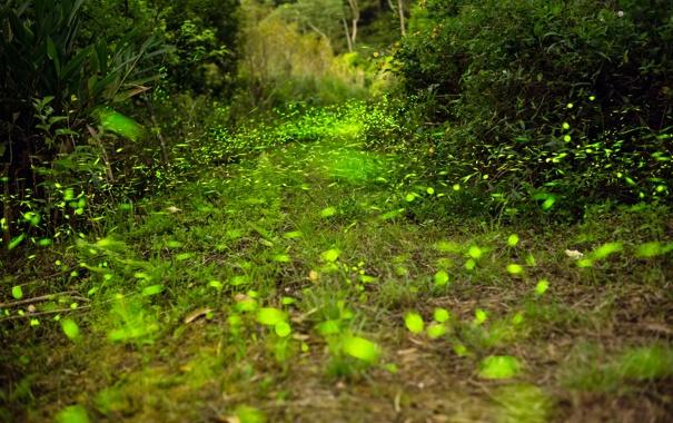 Фото обои лес, трава, блик, кусты, игра света