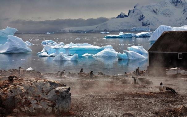 Фото обои вода, туман, дом, атмосфера, Пингвины, ледники