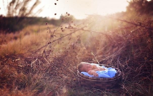 Фото обои природа, фон, младенец