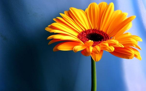 Фото обои цветок, оранжевый, фон