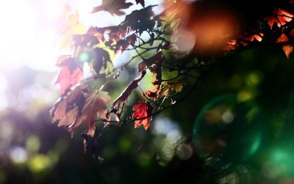 Фото обои осень, листья, цвета, свет, природа, дерево, обои