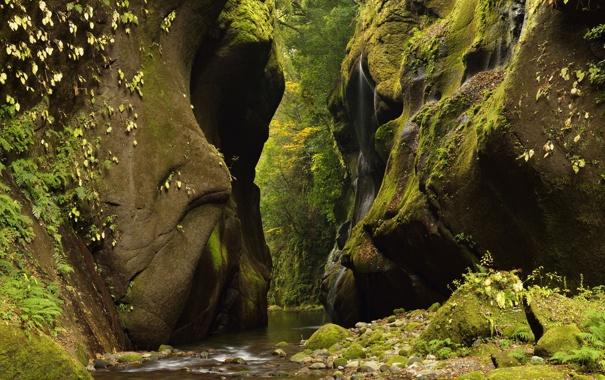 Фото обои лес, река, ручей, камни, скалы, ущелье