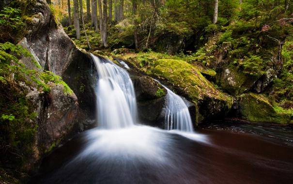 Фото обои лес, природа, река, поток, водопадик