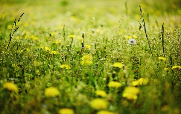 Фото обои природа, трава, лето