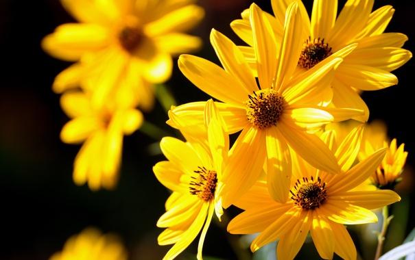 Фото обои макро, желтые, цветочки