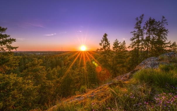 Фото обои лес, деревья, закат, природа