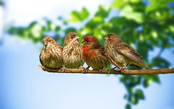 Фото обои небо, птицы, природа, ветка