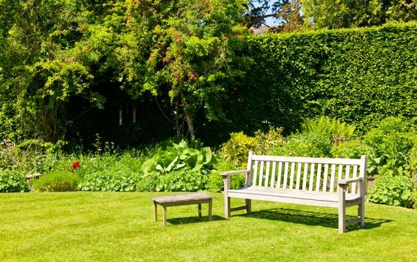 Фото обои кусты, трава, скамейка, лужайка, лавочка, зелень, парк