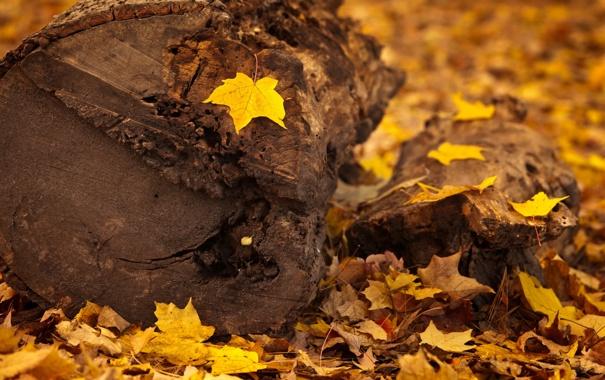 Фото обои осень, листья, макро, дерево