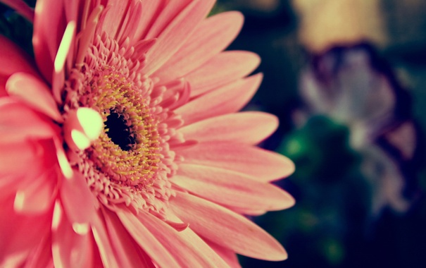 Фото обои цветок, макро, растение, лепестки